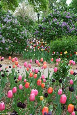 Lilacia Park 1 - http://chicagolandgarden.com/