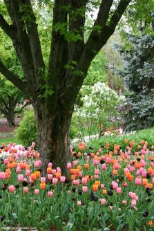 Lilacia Park 4 - http://chicagolandgarden.com/